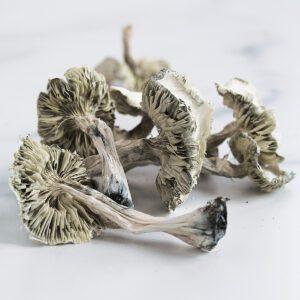 Limiteless-Mushrooms-Averys-Albino-01