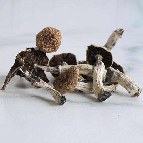 Limiteless-Mushrooms-Orissa-India-Minis-01