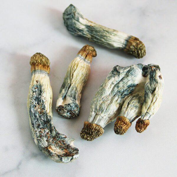Limiteless-Mushrooms-Penis-Envy-(PE)-01