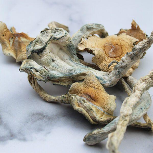 Limiteless-Mushrooms-Treasure-Coast-(TC)-01