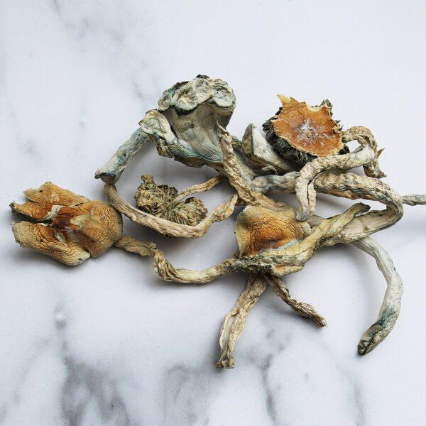 Limiteless-Mushrooms-Treasure-Coast-(TC)-02